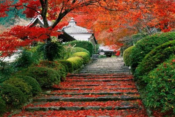 luksuz-putovanje-odmor-destinacija-japan-kjoto_07