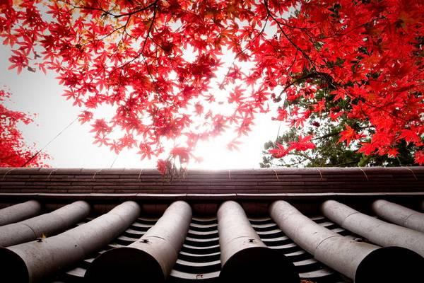 luksuz-putovanje-odmor-destinacija-japan-kjoto_10