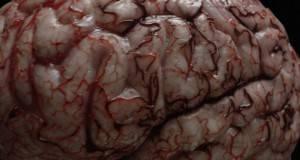Еве што се случува со вашето срце, белите дробови и мозокот кога ќе повлечете дим од цигара! (видео)