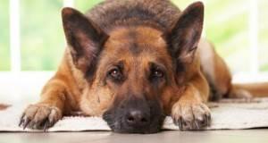 Поучна приказна: Зошто кучињата живеат толку кратко?