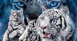 Само најдобрите ќе успеат: Пронајдете повеќе од 10 тигри