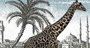 На сликата се крие уште една жирафа, ви боде очи, а не ја гледате!