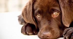 Јас сум куче, а не предмет да ме фрлиш! Јас живеам за да те сакам. А ти ако не ме сакаш, јас ќе умрам!