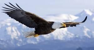 Поучна приказна: На 40 години орелот бира пат до смртта или пат кон ново, но болно раѓање!