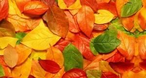 Што ви прескажуваат планетите за оваа есен?
