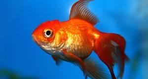 Загатка на денот: Колку тежи рибата?
