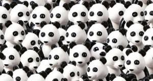Нова загатка: Пронајдете го кучето помеѓу пандите