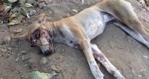 Ова куче се довлечкало во градина за да умре, но нема да верувате што се случило потоа…