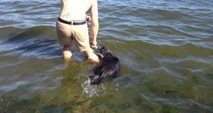 Влегол во вода и почувствувал како нешто му се мота околу ногата: Овој момент долго ќе го помни!