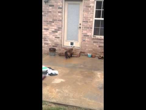 Два часа се мачел да направи мала врата за мачката, но нејзината реакција насмеа милиони