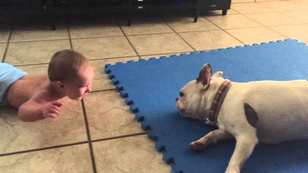 Куче се обидува да насмее бебе! Непроценливо…