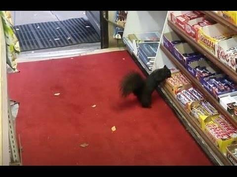 Најслаткиот крадец на светот: Сопственик на продавница се шокирал кога ги видел снимките!