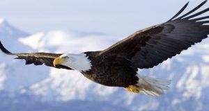 ПРИКАЗНА ЗА 60 СЕКУНДИ: Мудроста на орелот не ослободува од минатото – ЕВЕ КАКО