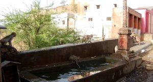 Мајмунски водени лудории во базен!