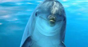 Топ 10 најпаметни примери од чудесниот свет на животните