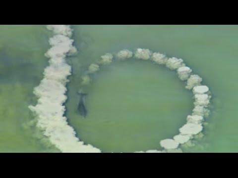 Делфини направиле круг од песок: Кога ќе дознаете за што служи, ќе сфатите зошто се најпаметни суштества
