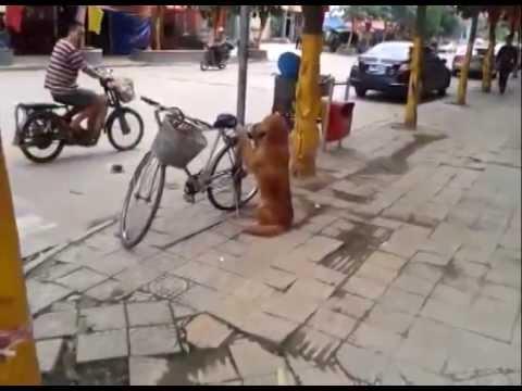 Е ова е куче чувар!