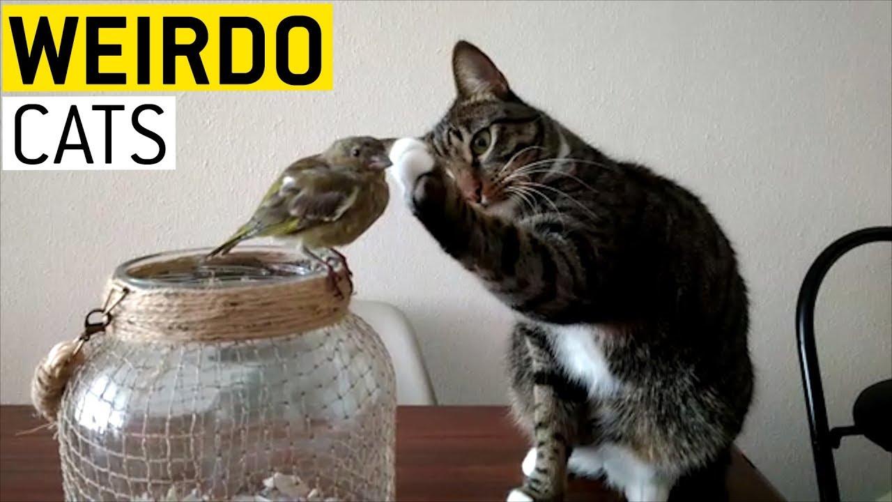 Мачките се чудни!