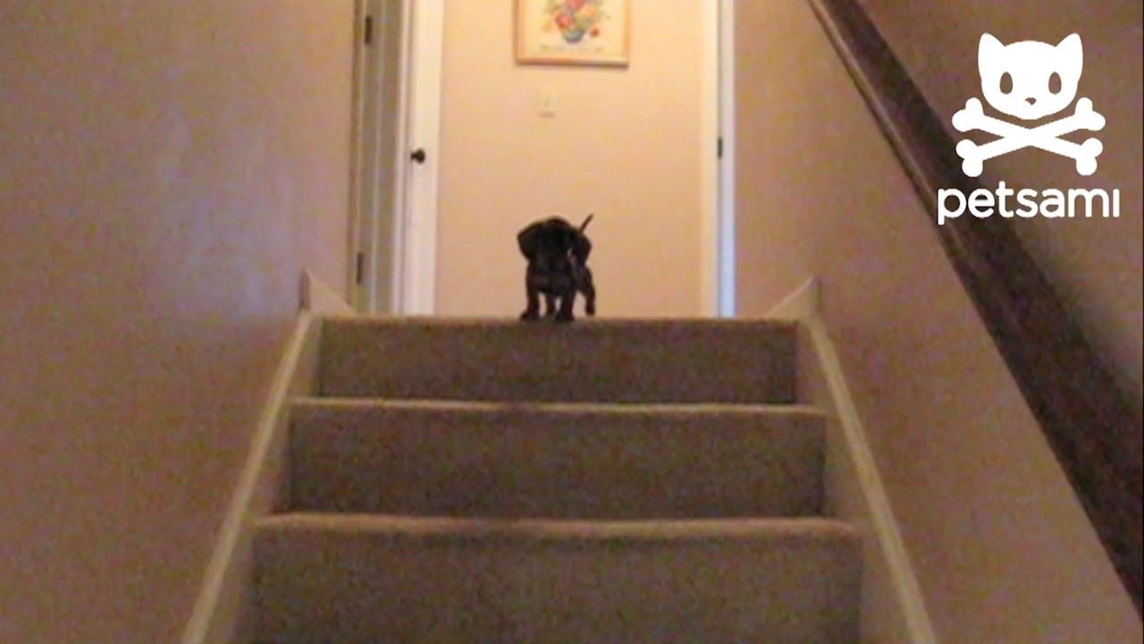 Мало кученце не смее да слезе по скалите. Погледнете кој доаѓа да го спаси!