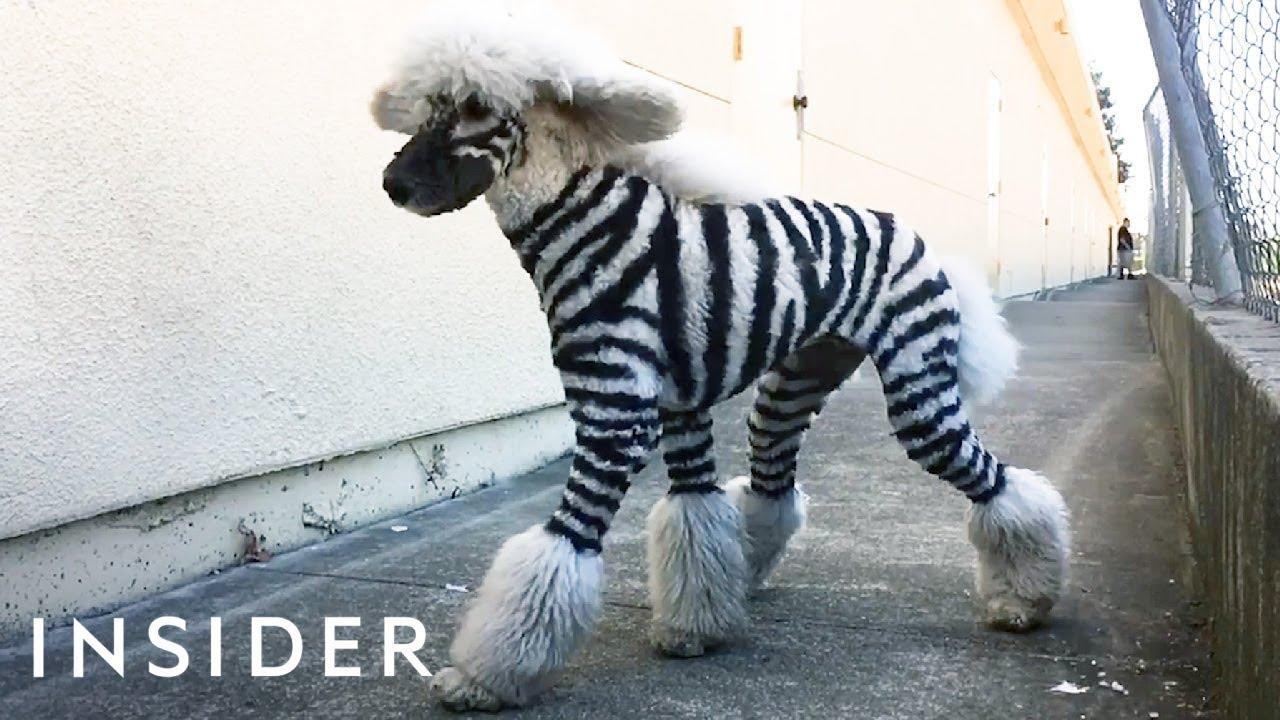 Салон кој  ги прави миленичињата да изгледаат како диви животни!