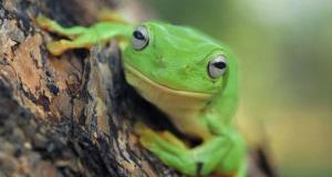 Група жаби (Охрабрување)