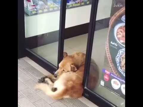 Мрзливи кучиња
