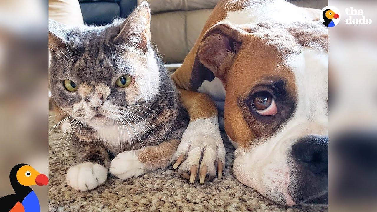Погледнете го кучето кое се заљуби во многу посебна мачка