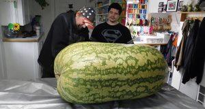 Нема да верувате што има во внатрешноста на оваа ОГРОМНА лубеница