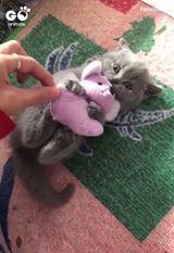 Остави ми ја играчката!
