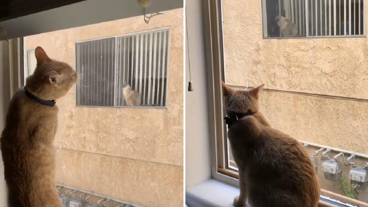 Овие мачки секојдневно се гледаа низ прозорецот,а потоа станаа најдобри пријатели