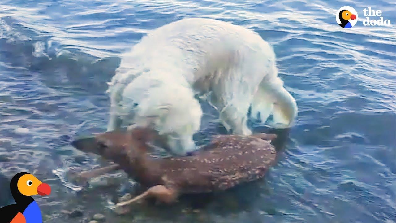 Животни кои си помагаат меѓусебно во вистински момент