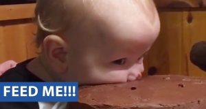 Чокохолик