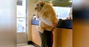 Животни на ветеринар: Реакции кои ќе ве насмеат до солзи