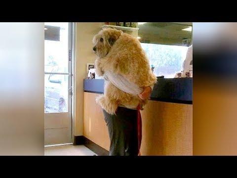 zhivotni-na-veterinar-reakcii-ko.jpg