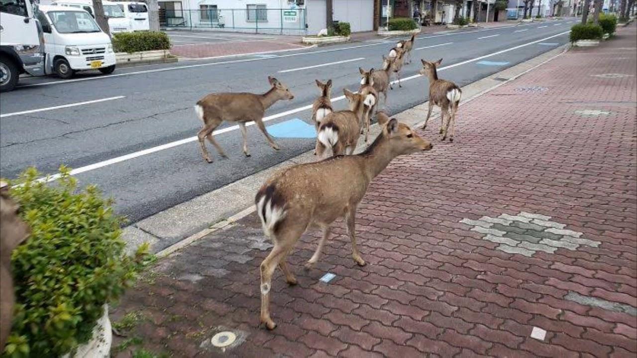 Кои сѐ животни слободно си шетаат по улиците низ големите градови во светот?
