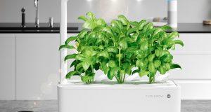 Преносна градина: Паметен уред во кој растат мини домати, босилек и магдонос
