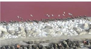 Розeво езеро во Сенегал во кое не можете да потонете