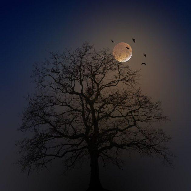 mesec-drvo-horoskop-830x0