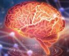Тест кој открива колку е развиен вашиот мозок