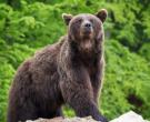 ВНИМАНИЕ: На Шар Планина мечки се шетаат по улици.. да не биде оф леле мајко…