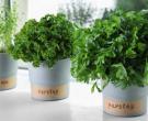 Намалете ја вашата телесната тежина со помош на билки