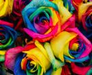 Ружите во бои на виножито се ХИТ во светот, eве колку пари треба да издвоите за една