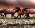 Сонувавте коњ, слон или мачка? Проверете што значи тоа, и што ви порачуваат соновите!