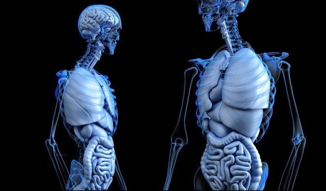 18714_anatomical-2261006_960_720_f
