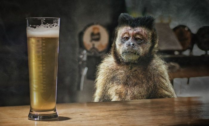 наслов мајмун