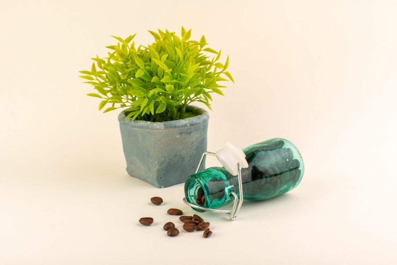 biljka-kafa-u-zrnu-1536x1024