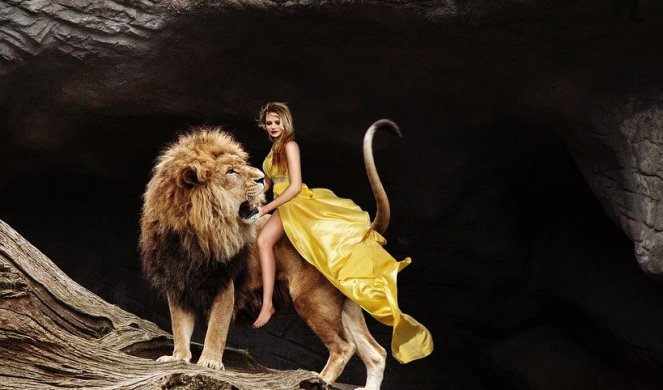 259751_lion-3403595-960-720_f