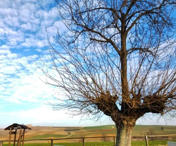 дрво-11