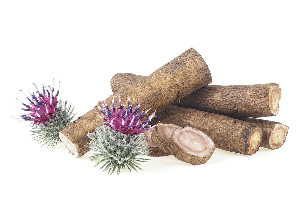 Burdock roots and burdock flowers isolated on a white background