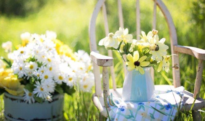 274365_gardendaisies-flowers-garden-35847_f.jpg